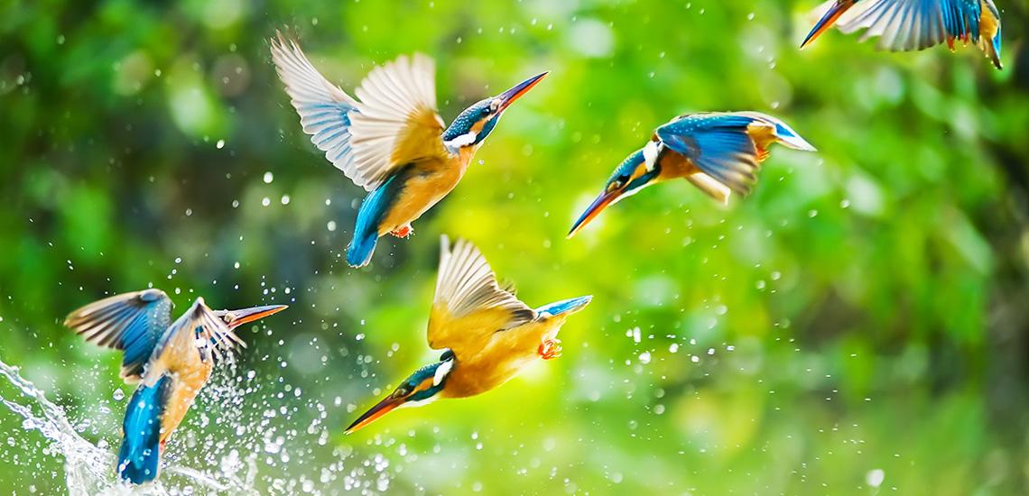 CMS_Creative_164657191_Kingfisher[1]